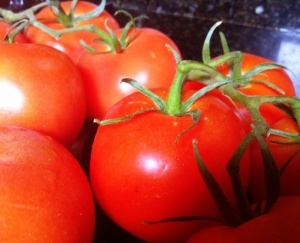 Tomatoes for Tomato Sauce